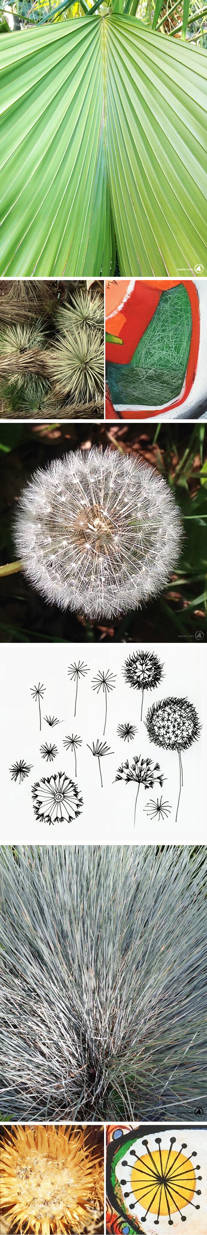 flores-estructura-a